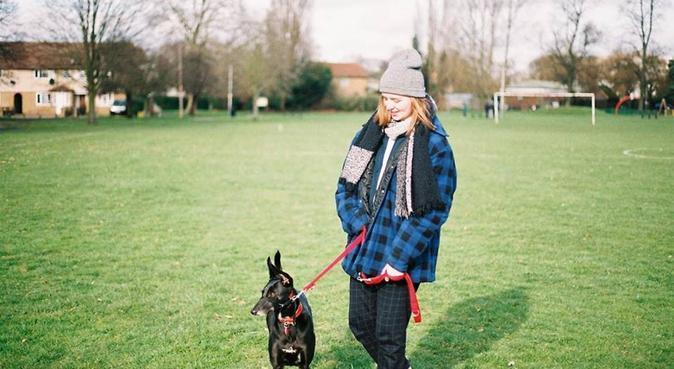 Ellie's Doggy Daycare, dog sitter in Uxbridge