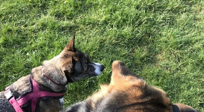 Paw Perfect Holidays, dog sitter in Milnrow, Rochdale, UK