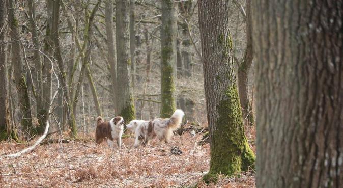 L'amoureuse des chiens à l'Étang la ville, dog sitter à L'Étang-la-Ville, France