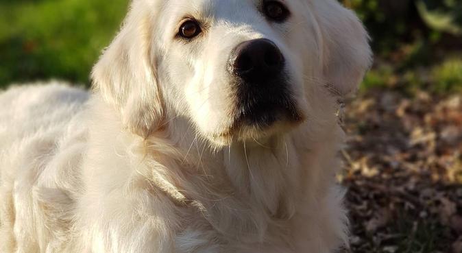 Le paradis des toutous - pension de famille, dog sitter à QUINSAC