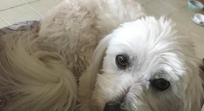 Des câlins et de l'attention à foison !, dog sitter à Toulouse, France