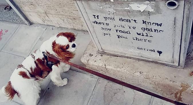 Affidabilità, Responsabilità e tante coccole!, dog sitter a Bari, BA, Italia