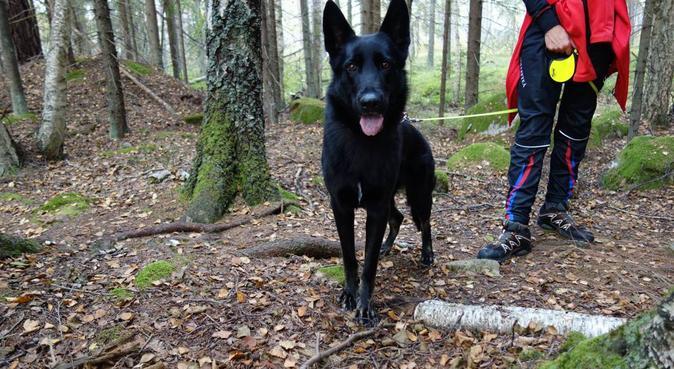 Erfaren dag/dygnspassning i Mölndal, hundvakt nära Mölndal