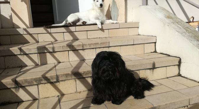 Comme a la maison, dog sitter à Mondeville, France