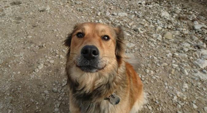 Vous lui manquerez, mais il sera comme à la maison, dog sitter à Villers-lès-Nancy