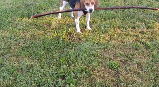 I cani come parte integrante della famiglia, dog sitter a SERRA RICCO'