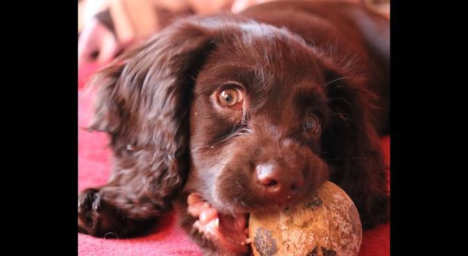 Willowbee dog care, dog sitter in Ingatestone