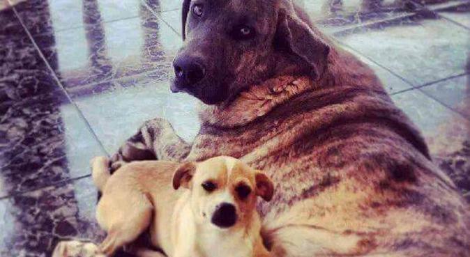 Responsabilidad y un hogar acogedor para tu perro, canguro en Alicante