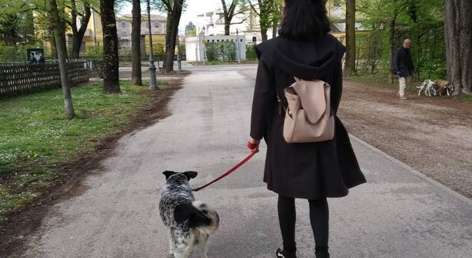 Premura e affetto per gli amici a 4 zampe, dog sitter a Parma