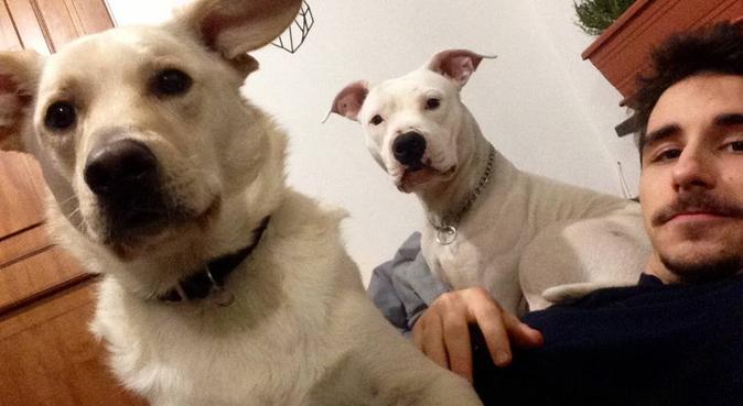 Tante coccole e passeggiate con un veterinario, dog sitter a Pisa