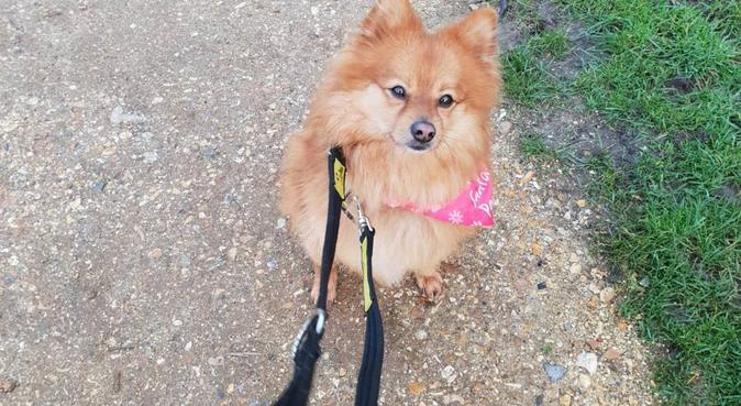 Doggie Snuggles Wimborne, dog sitter in Wimborne