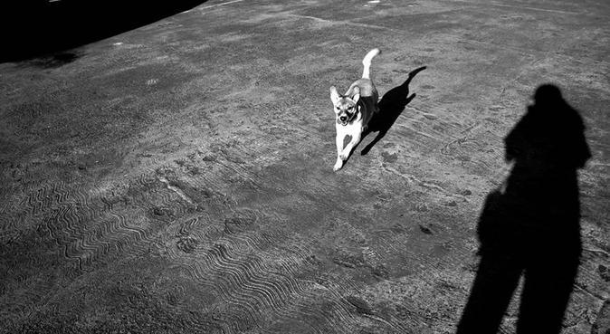 Amante de perros, fotógrafa, cuidaré a tu bebé, canguro en Tarrasa