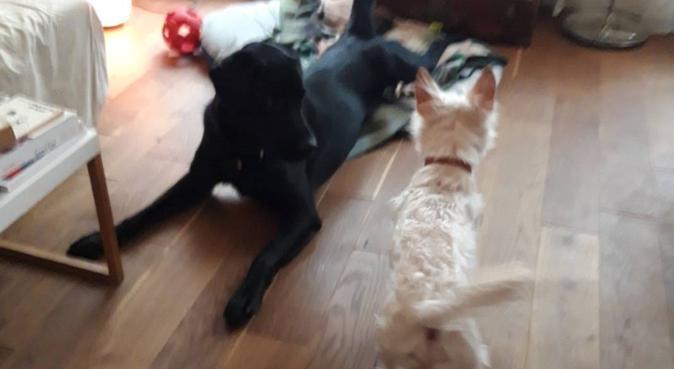 La maison des copains, dog sitter à PARIS
