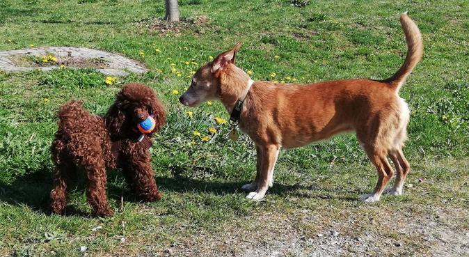 Zuverlässiger Gassigeher aus Trudering, Hundesitter in München