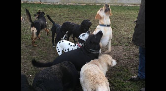Les promenades du bonheur, dog sitter à Carrières-sur-Seine