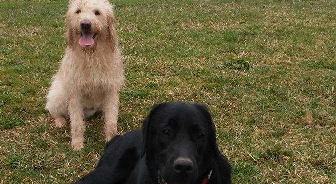 Doggy Day Care with Big Garden and Many Cuddles, dog sitter in Pinner