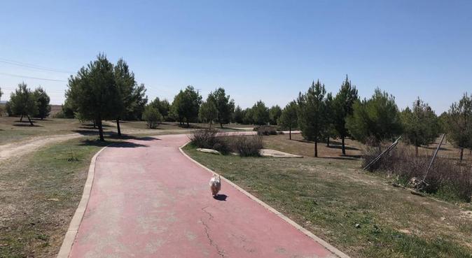 Tu perrito como en casa!, canguro en Madrid