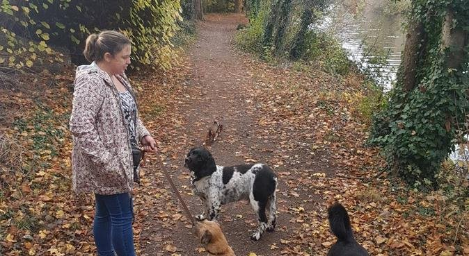 Does your dog love to play with other dogs?, dog sitter in Chertsey