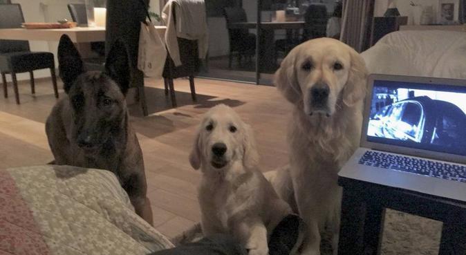 Les chiens sont mes meilleurs amis, dog sitter à Gex, France