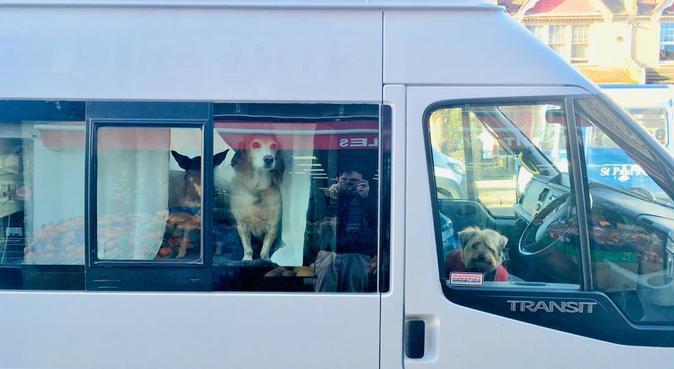 Paw patrol in London! Walks, day care, boarding!, dog sitter in London