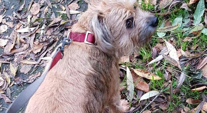 Walks and cuddles in ifield, dog sitter in Crawley