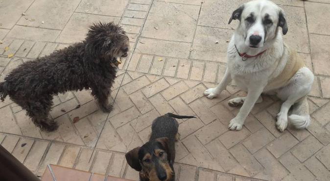 No se arrepentirá, y su perro tampoco!, canguro en Rota, España