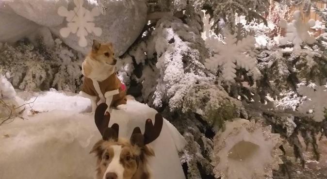 Enthousiaste hondenoppassers in Nieuwerkerk ad IJs, hondenoppas in Nieuwerkerk aan den IJssel