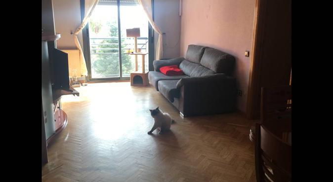 Amante de los animales, hogar acogedor perruno, canguro en Madrid