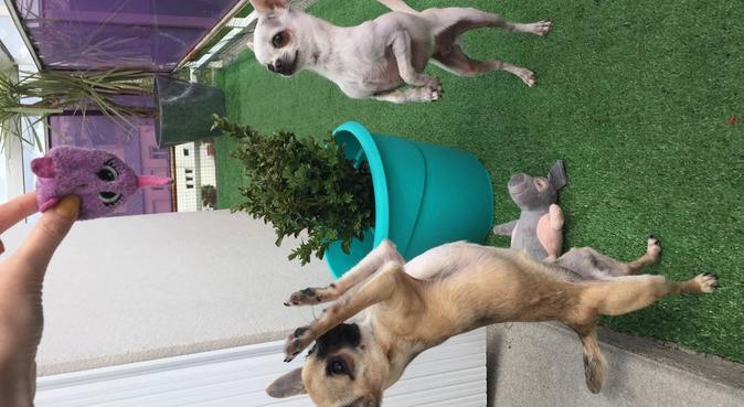 Je m'occupe de chaque chiens comme des bébés., dog sitter à Brest