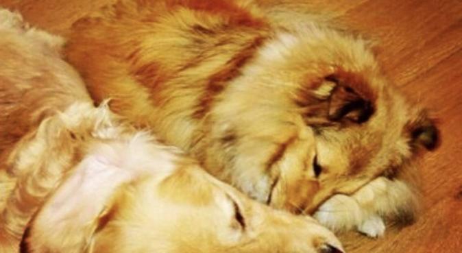 Câlins, jeux, sorties en toute confiance, dog sitter à Lyon