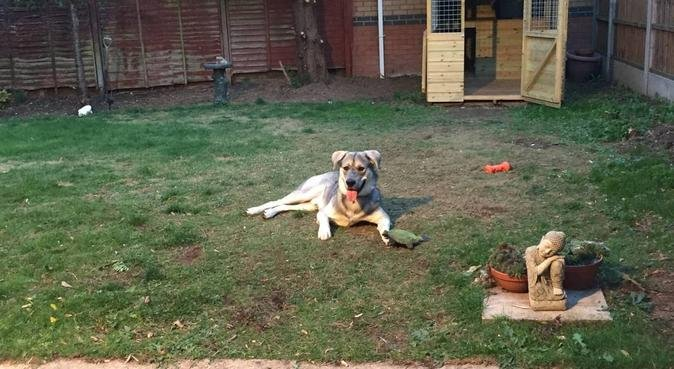 Loving care when you can't be there in Birchwood, dog sitter in Lincoln, UK
