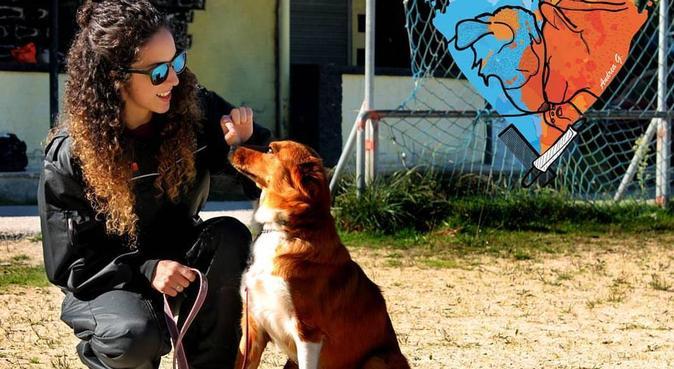 Pelitos, cuidados y cariño para tus peludos :D, canguro en Oviedo