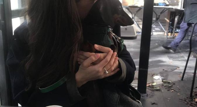 Tanto amore e lunghe passeggiate., dog sitter a Roma