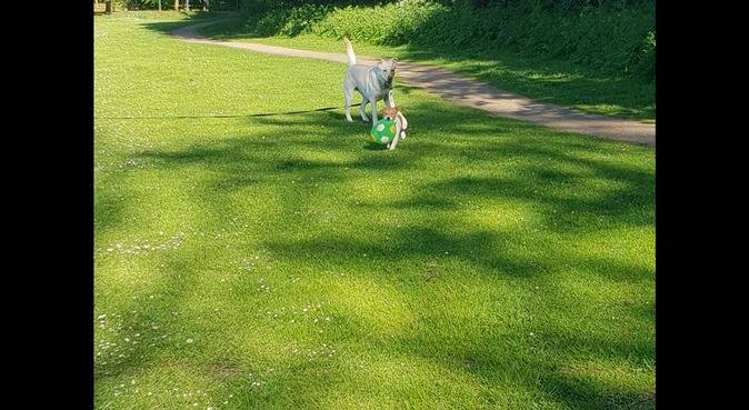 Auntie Bec's Pet Care, dog sitter in Speke