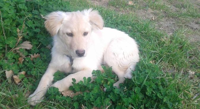 Passeggiate, giochi e tanto amore, dog sitter a Caserta