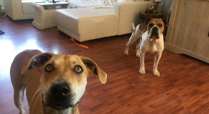 Liefdevol hondenparadijs in Haarlem, hondenoppas in Haarlem