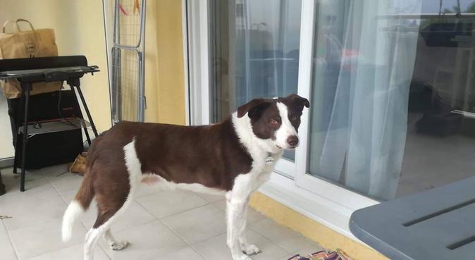 Séjour pour toutou 😊, dog sitter à Nice