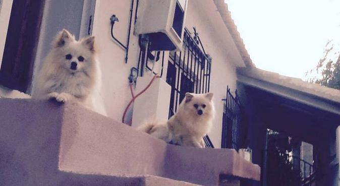 I just love dogs, in Spain we looked after 5, hundvakt nära Skarpnäck