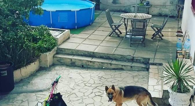 Joyita Perruna, canguro en Santa Coloma de Cervelló