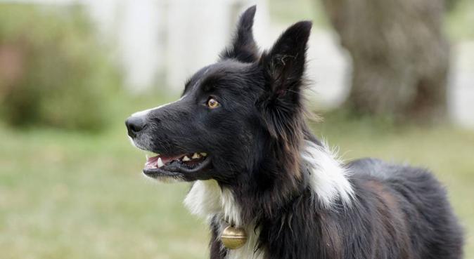 Cuidadora de perros  ❤︎🐶, canguro en Villanueva de la Cañada