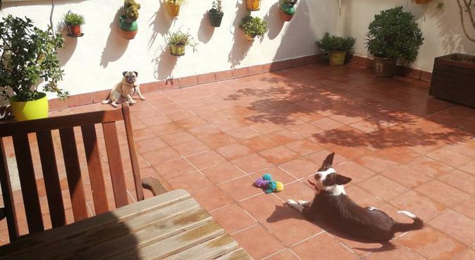Cuidadora de mascotas,con mucho amor y experiencia, canguro en Rubí, España