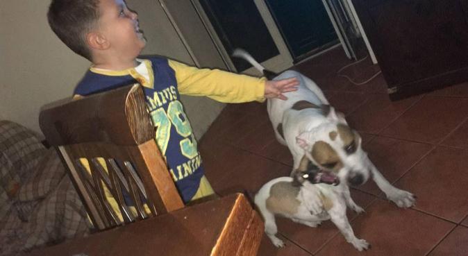 Un'amica speciale ***Leggere l'annuncio***, dog sitter a Napoli, Metropolitan City of Naples, Italy
