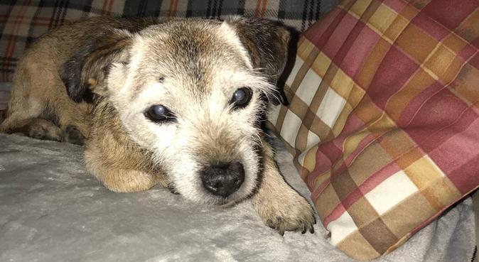 Dog holidays at Mutleyland, dog sitter in Essex