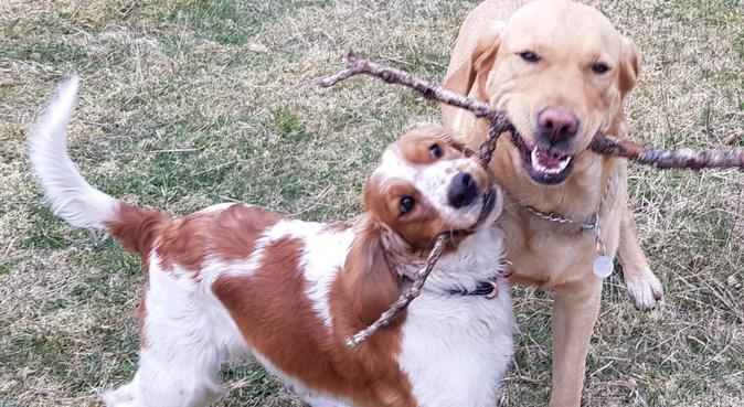 Hundsemester helt naturligt i lantlig miljö, hundvakt nära Alingsås