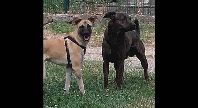 La maison des câlins, dog sitter à Bagneux