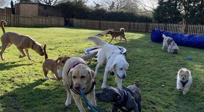 Day Care Centre & Boarding 🐾🐶, dog sitter in Woodford Green Essex