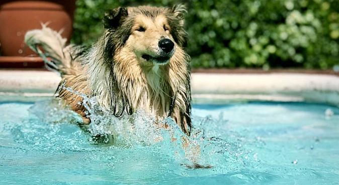 El mejor hogar para tu perr@ ❤️, canguro en Vacarisses