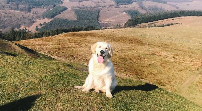 Love, cuddles and adventures in Newport!, dog sitter in Newport