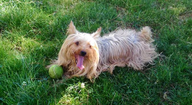 Passeggiate con attenzione e affetto, dog sitter a Genova