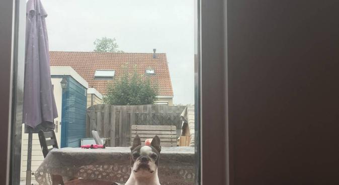 Honden-retreat Wollegras, hondenoppas in Almere